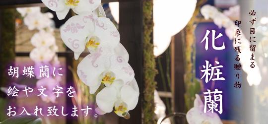 印象に残る贈り物 化粧蘭